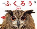 【壁掛】ふくろうカレンダー(2017)