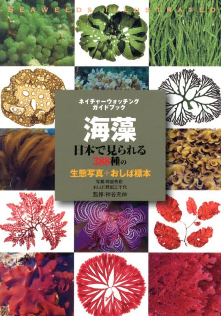 海藻 日本で見られる388種の生態写真+おしばの標本 (ネイチャーウォッチングガイドブック) [ 阿部秀樹 ]
