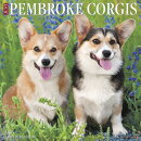 Just Pembroke Corgis 2019 Wall Calendar (Dog Breed Calendar)