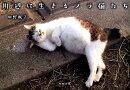 川辺に生きるノラ猫たち
