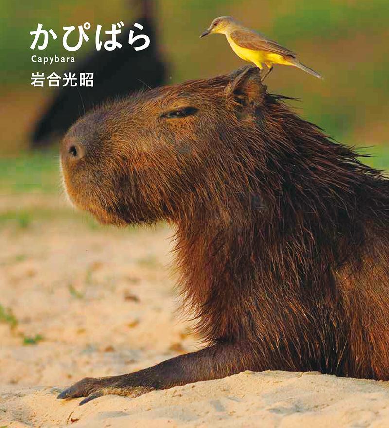 かぴばら (IWAGO'S BOOK) [ 岩合光昭 ]