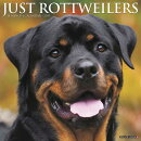 Just Rottweilers 2019 Wall Calendar (Dog Breed Calendar)