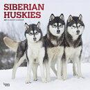 Siberian Huskies 2021 Square Foil