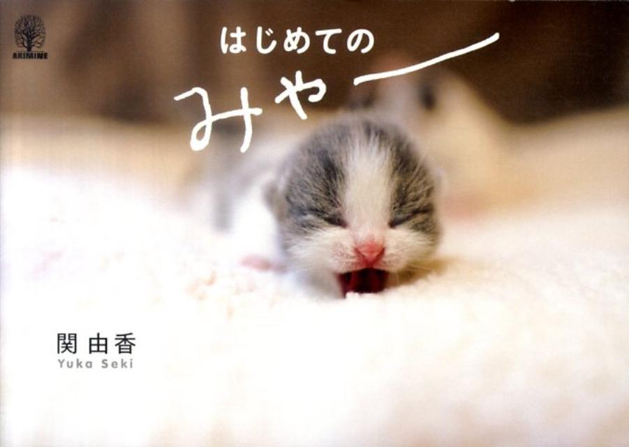 はじめてのみゃー [ 関由香 ]