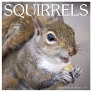 Squirrels 2019 Wall Calendar