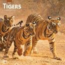 Tigers 2021 Square