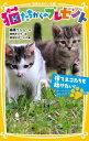 猫たちからのプレゼント(捨てネコたちを助けたい!) [ 高橋うらら ]