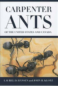 Carpenter_Ants_of_the_United_S