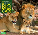 National Geographic Big Cats 2019 Calendar