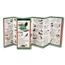 Sibley's Birds of the Alaskan Coast