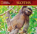 Cal 2019 National Geographic Sloths