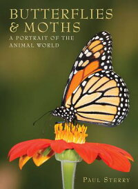 Butterflies&Moths:APortraitoftheAnimalWorld[PaulSterry]