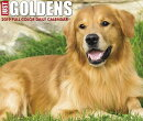 Just Goldens 2019 Box Calendar (Dog Breed Calendar)
