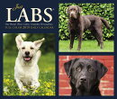 Just Labs 2019 Box Calendar (Dog Breed Calendar)