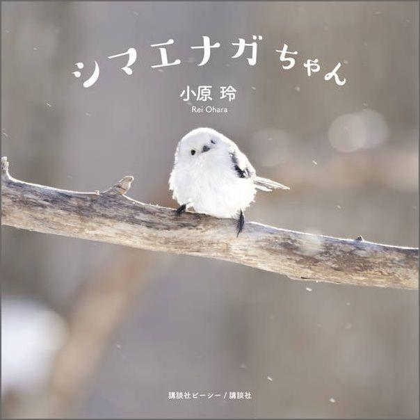 シマエナガちゃん [ 小原 玲 ]