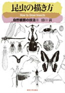 昆虫の描き方