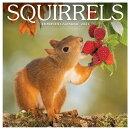 Squirrels 2021 Wall Calendar
