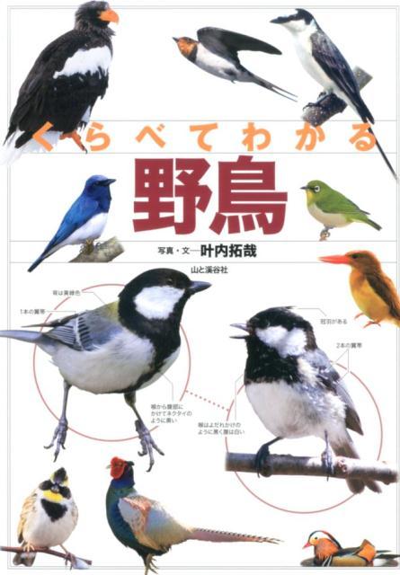 くらべてわかる野鳥 識別ポイントで見分ける [ 叶内拓哉 ]