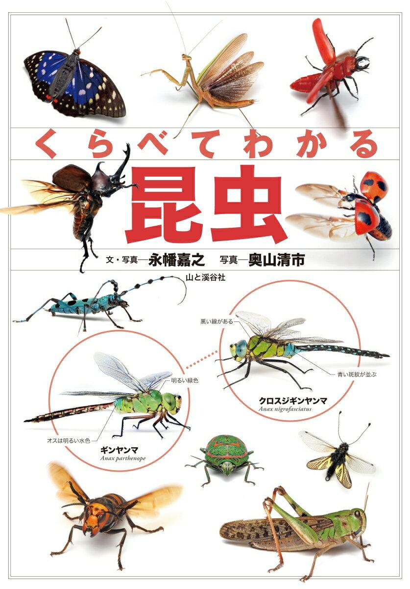 くらべてわかる昆虫 識別ポイントで見分ける [ 永幡嘉之 ]