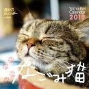 週めくりカレンダーなごみ猫(2019)
