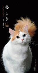 美しき猫カレンダー