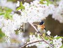 カレンダー2019 鳥たちと日本の美しい風景