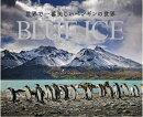 世界で一番美しいペンギンの世界