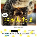 開運!にゃんたまカレンダー(2020) ([カレンダー])