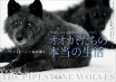 30年にわたる観察で明らかにされたオオカミたちの本当の生活 パイプストーン一家の興亡 [ ギュンター・ブロッホ ]