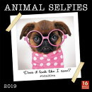 2019 Animal Selfies 16-Month Wall Calendar: By Sellers Publishing