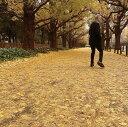 或る秋の日 [ 佐野元春 ]