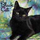 Just Black Cats 2018 Wall Calendar