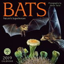 Bats 2019 Wall Calendar: Nature's Superheroes