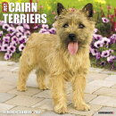 Just Cairn Terriers 2018 Wall Calendar (Dog Breed Calendar)