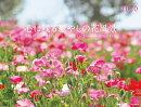 心に残る癒やしの花風景 Beautiful Flower Garden in Y(2020)