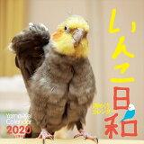 週めくりカレンダーいんこ日和(2020) ([カレンダー])