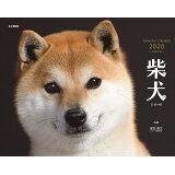 柴犬カレンダー(2020) ([カレンダー])