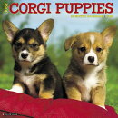 Just Corgi Puppies 2018 Wall Calendar (Dog Breed Calendar)