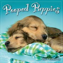 2019 Pooped Puppies Mini Calendar: By Sellers Publishing