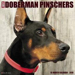 Just Dobermans 2018 Wall Calendar (Dog Breed Calendar)