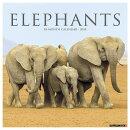 Elephants 2018 Wall Calendar