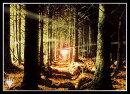 マジック:ザ・ギャザリング プレイヤーズカードスリーブ 『オンスロート』《森》 (MTGS-109)