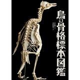 鳥の骨格標本図鑑 (BIRDER SPECIAL)