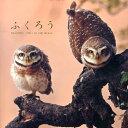 ふくろう BEAUTIFUL OWLS IN THE WORLD [ アフロ ]