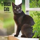 Black Cats 2017 Square