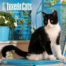 Tuxedo Cats 2017 Square