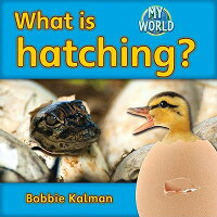 What_Is_Hatching?