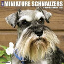 Just Miniature Schnauzers 2018 Wall Calendar