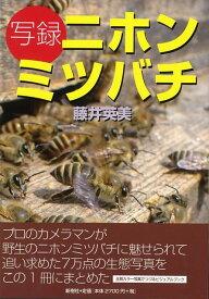 【バーゲン本】写録ニホンミツバチ [ 藤井 英美 ]