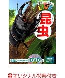 【楽天ブックス限定特典付き】学研の図鑑LIVE 昆虫